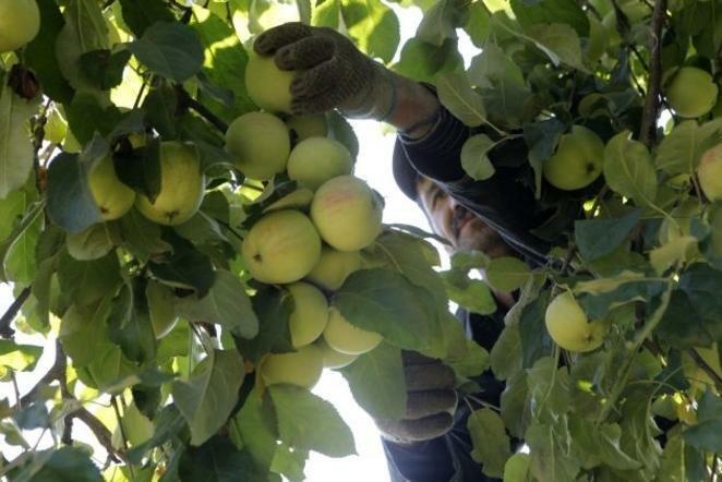 Ekologiški obuoliai