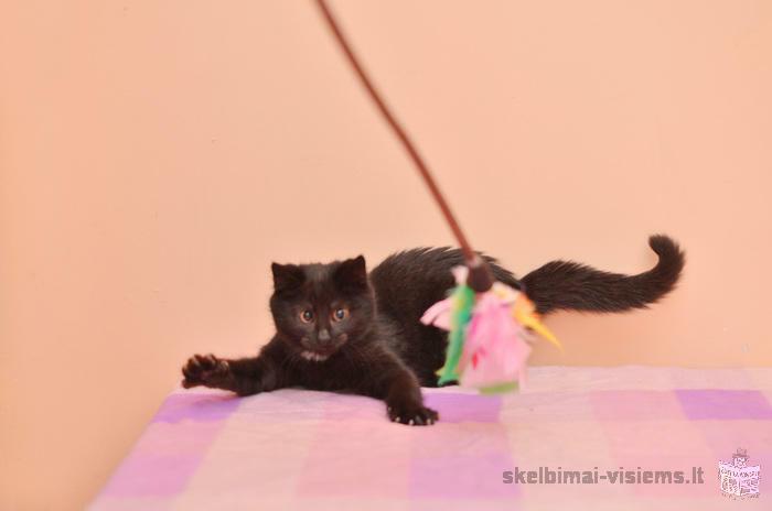 Energingoji katytė Manija ieško namų!