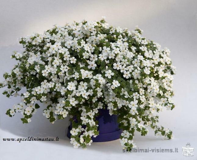 Gėlių išpardavimas