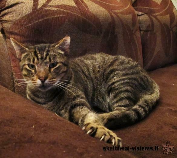 Geriems žmonėms dovanojame labai meilų katiną.