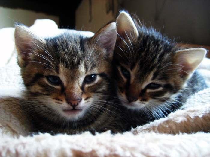Katinėliai