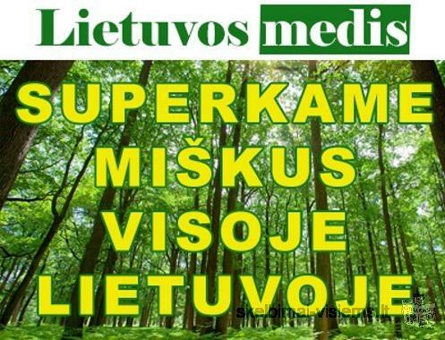 "Lietuvos medis"" brangiai perka miska visoje Lietuvoje"