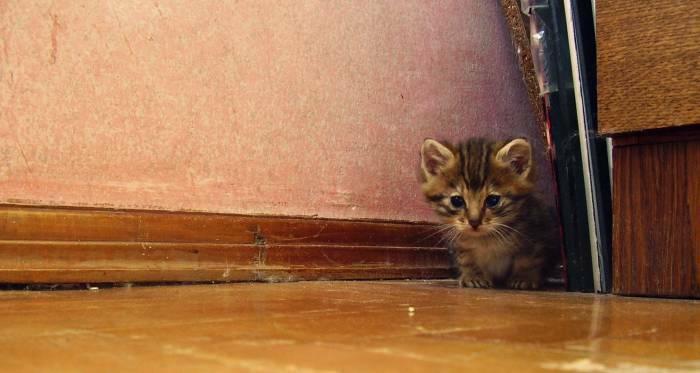 Mielas mazas kaciukas iesko namu.