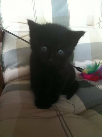 Mielos katytės