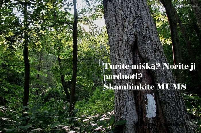 Norime nupirkti Jūsų mišką