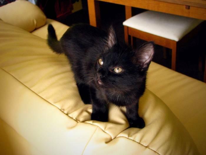 O pasirodo, kad ne visi juodi kačiukai šiltai įsitaisę guli ant pečiaus pas gerąsias raganas ir burtininkus. Štai kad ir kačiukas Apris,nors ir juodas,jo istorija žemiška ir net nedvelkianti stebuklu.