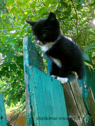 Padovanosiu kačiukus