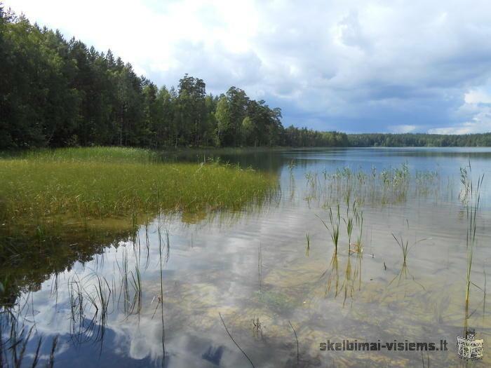Parduodama 0,65 ha miško žemė Aukštaitijos nacionaliniame parke