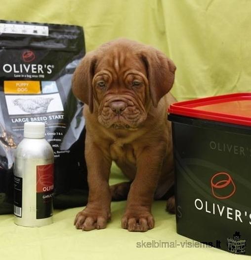 Parduodami bordo dogų veislės šuniukai su kilmės dokumentais