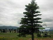 Perka brandų mišką Radviliškio raj. bei Lietuvoje