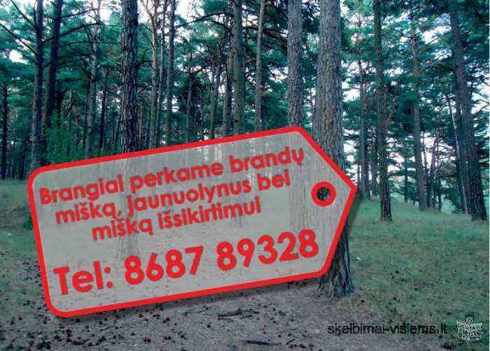 Perkame miškus visoje Lietuvoje