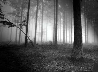 """Pramoga """"Paklaidinimas miške"""""""