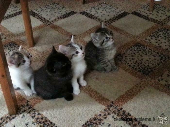 Skubiai dovanojami 1,5 mėn. kačiukai!