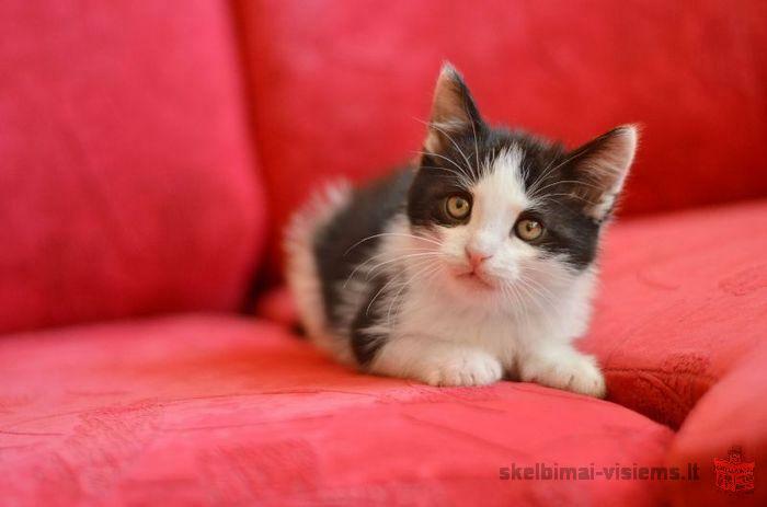 dovanojamas draugiškas 3 mėn kačiukas Selfis